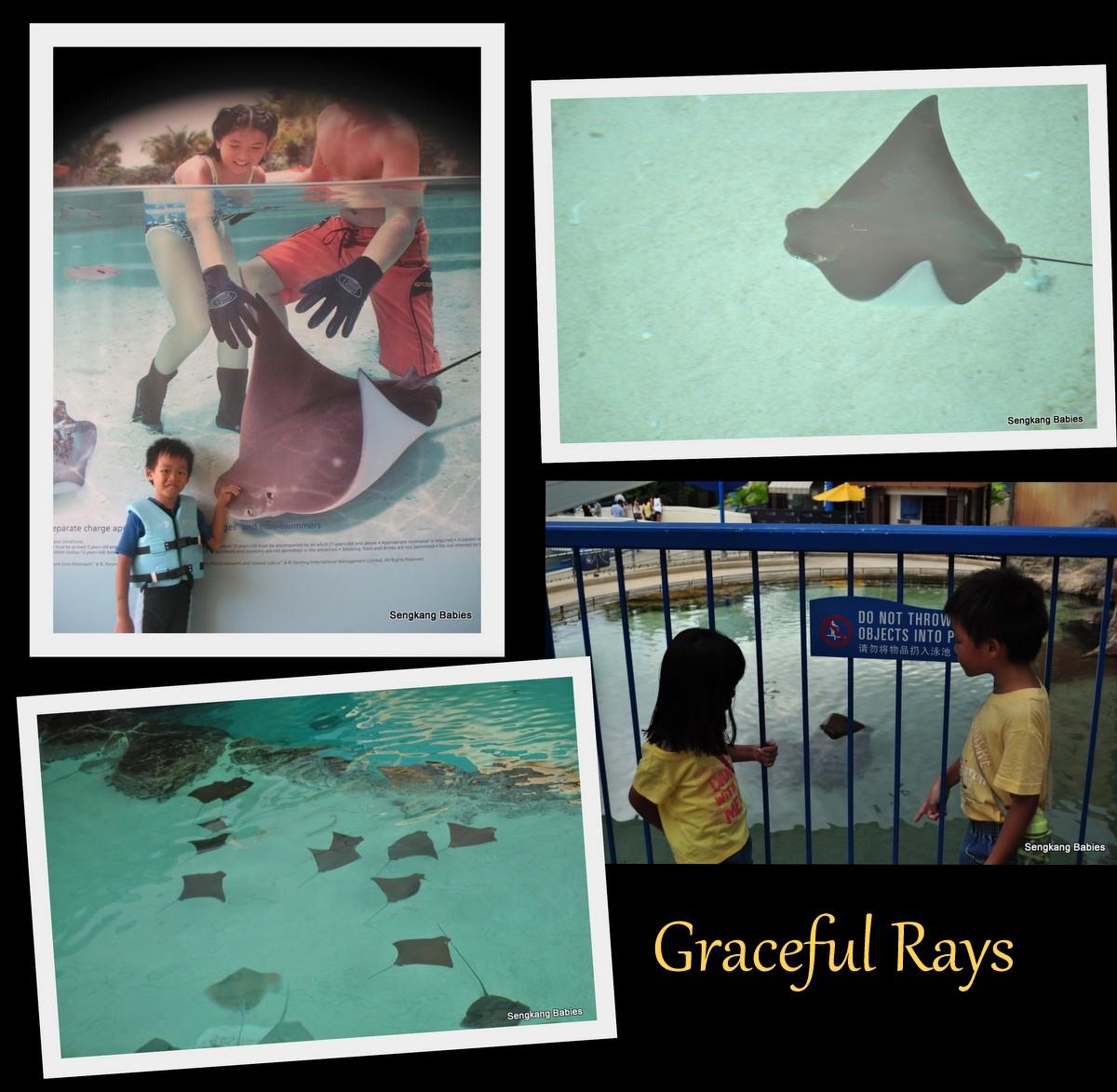 adventure cove rays