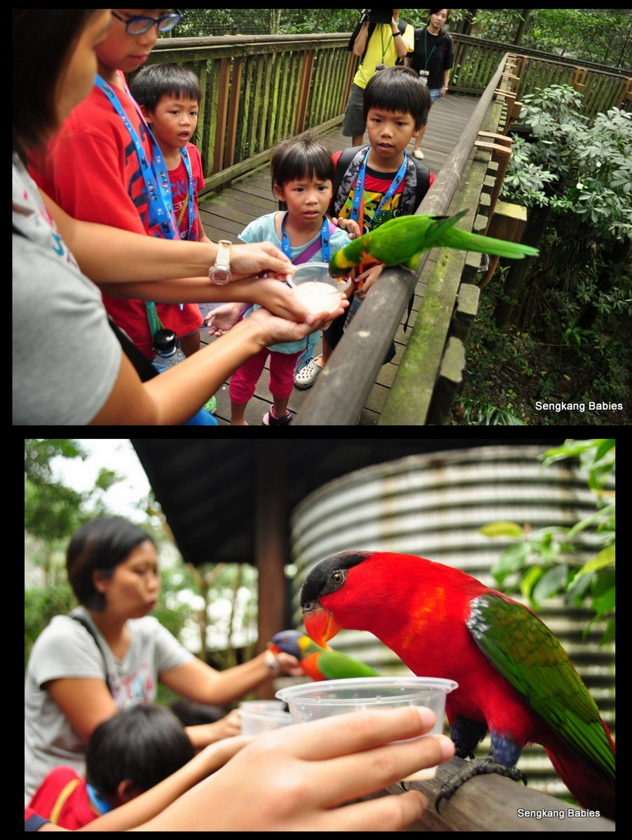 Jurong Birdpark lory bird feeding, lory birds at bird park