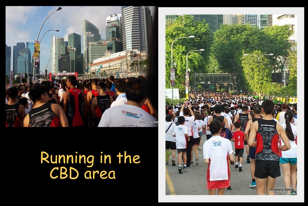 Safra Bay run 2014 video