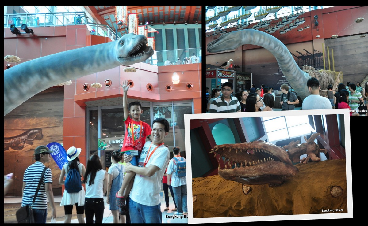 20150815 Sea Aquarium1