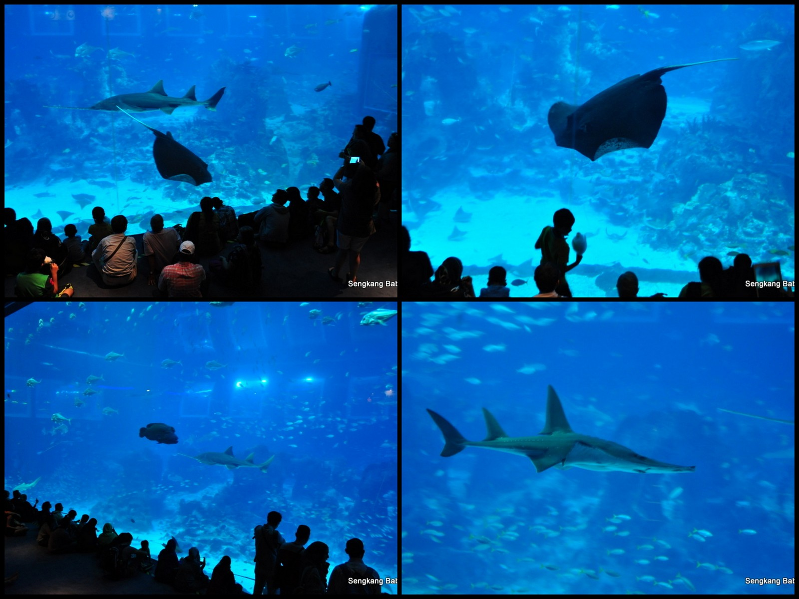 20150815 Sea Aquarium11