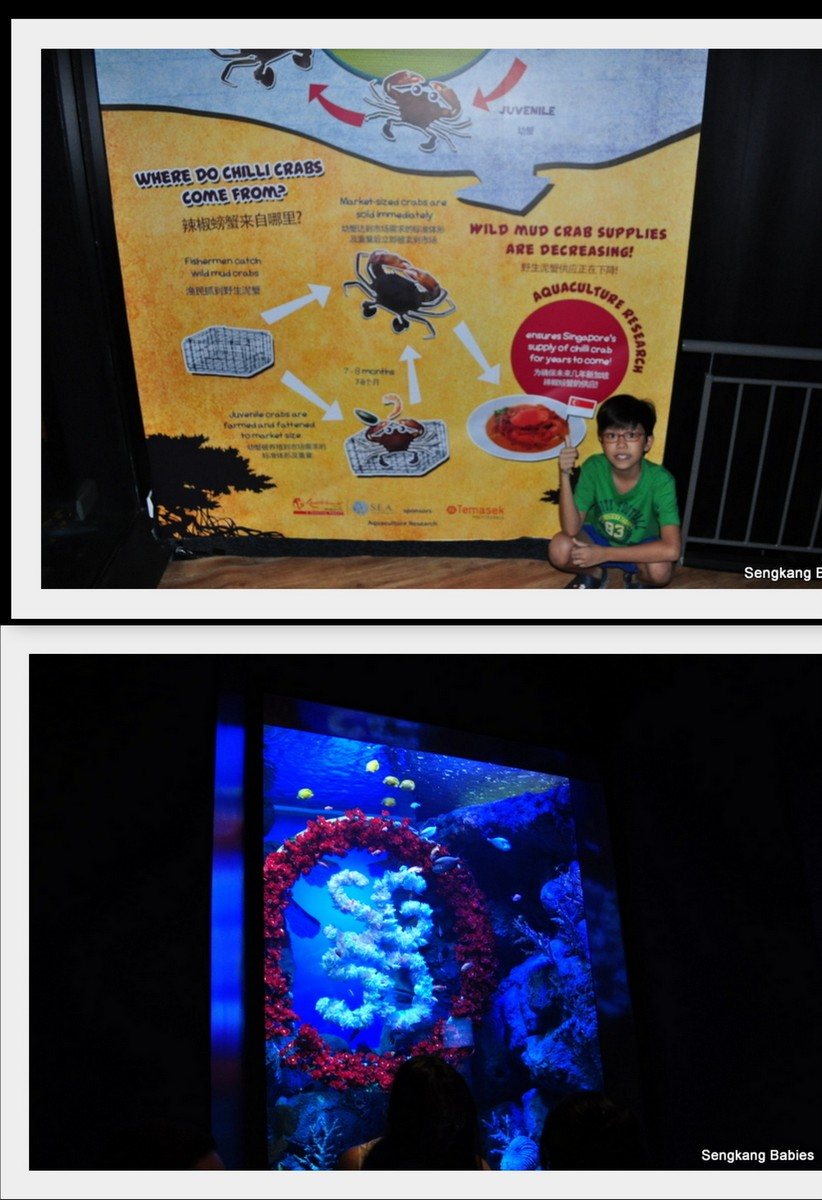 20150815 Sea Aquarium14