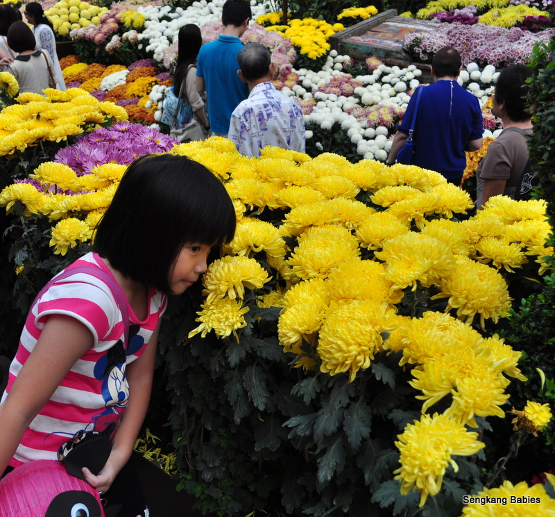 Celebration of Chrysanthemums at Gardens by the Bay