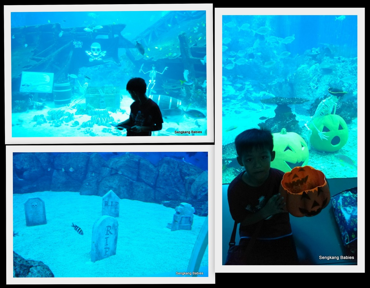 Sea Aquarium Halloween export6