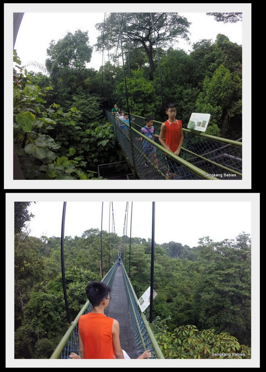Macritchie tree top walk with family
