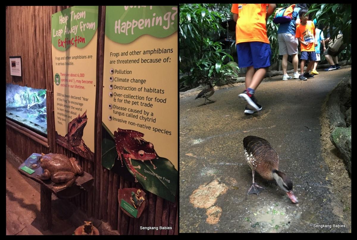 20160227 Zoo Run1