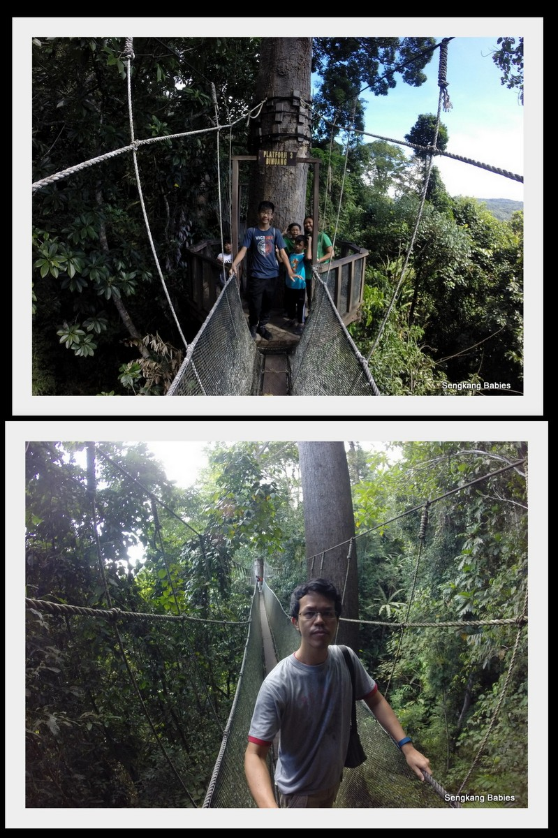Canopy walk Poring hot spring