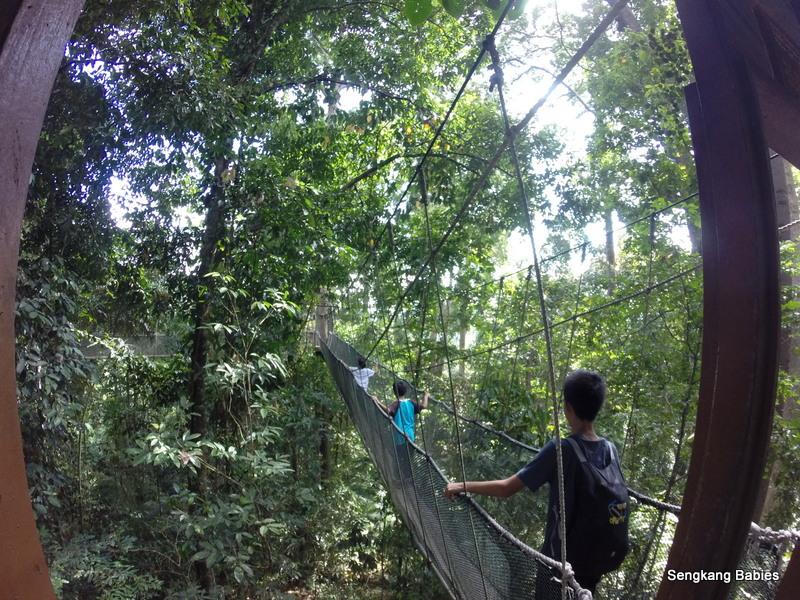 Sabah canopy walk