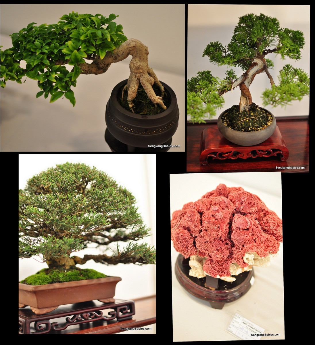 singapore garden festival bonsai