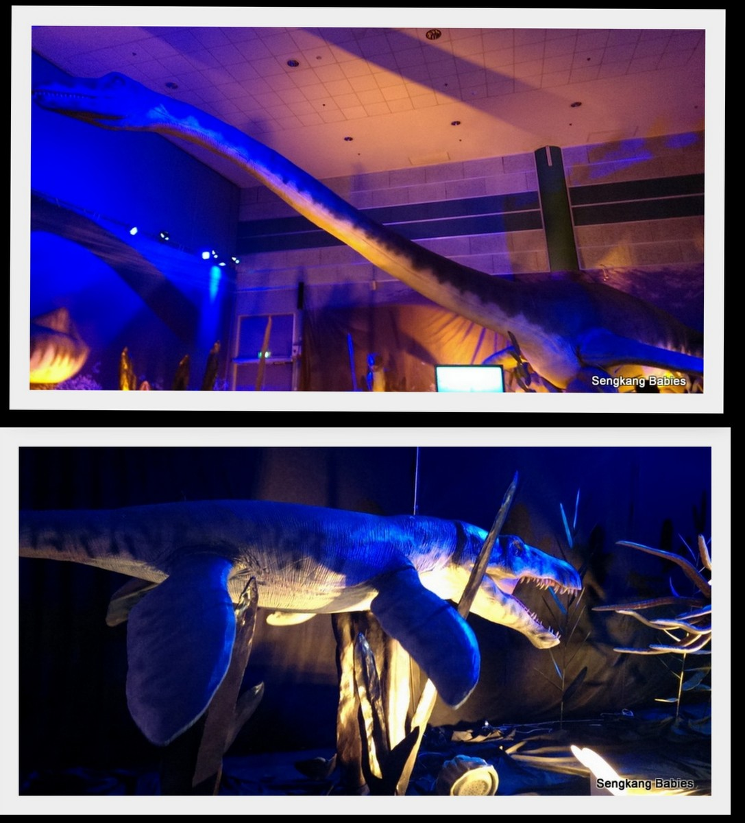 20160124 sea monsters science center6