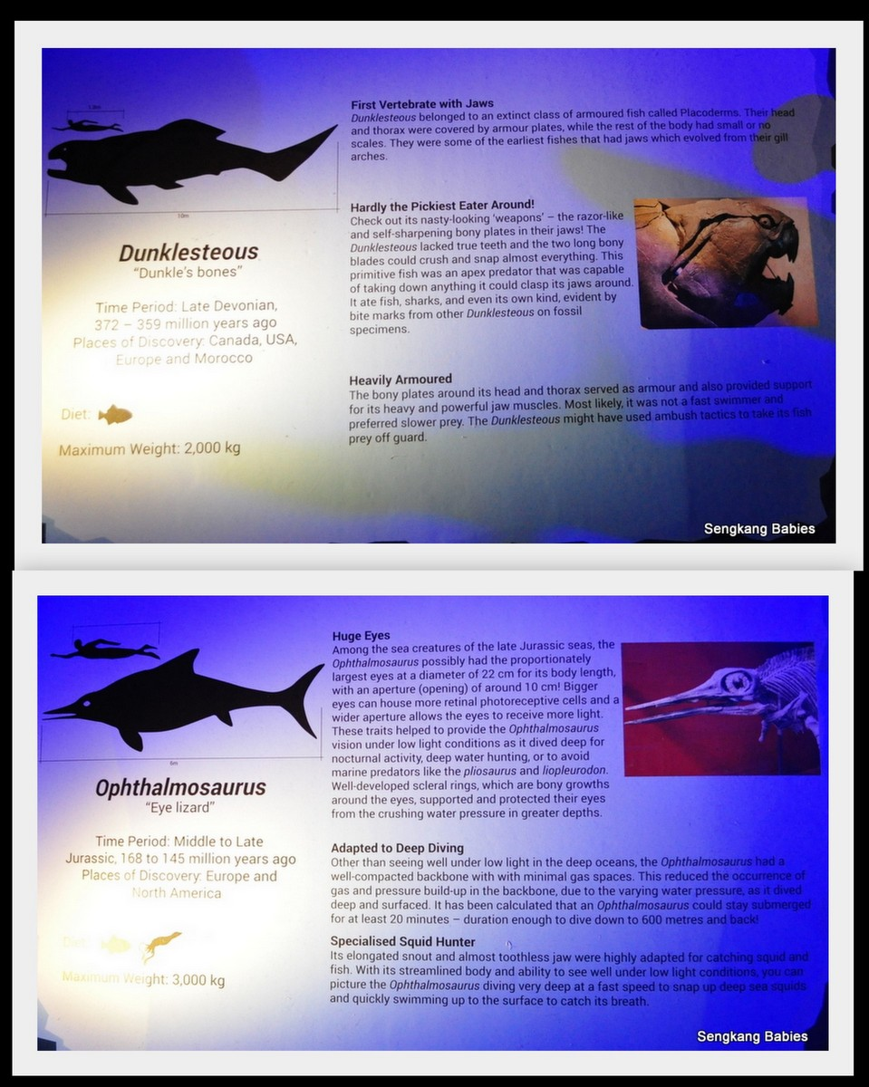 20160124 sea monsters science center9