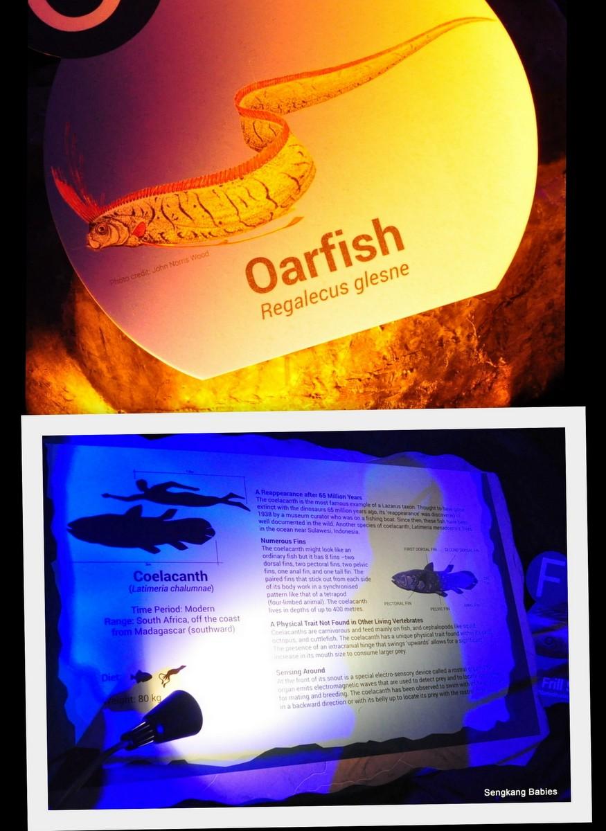 Oar fish prehistoric