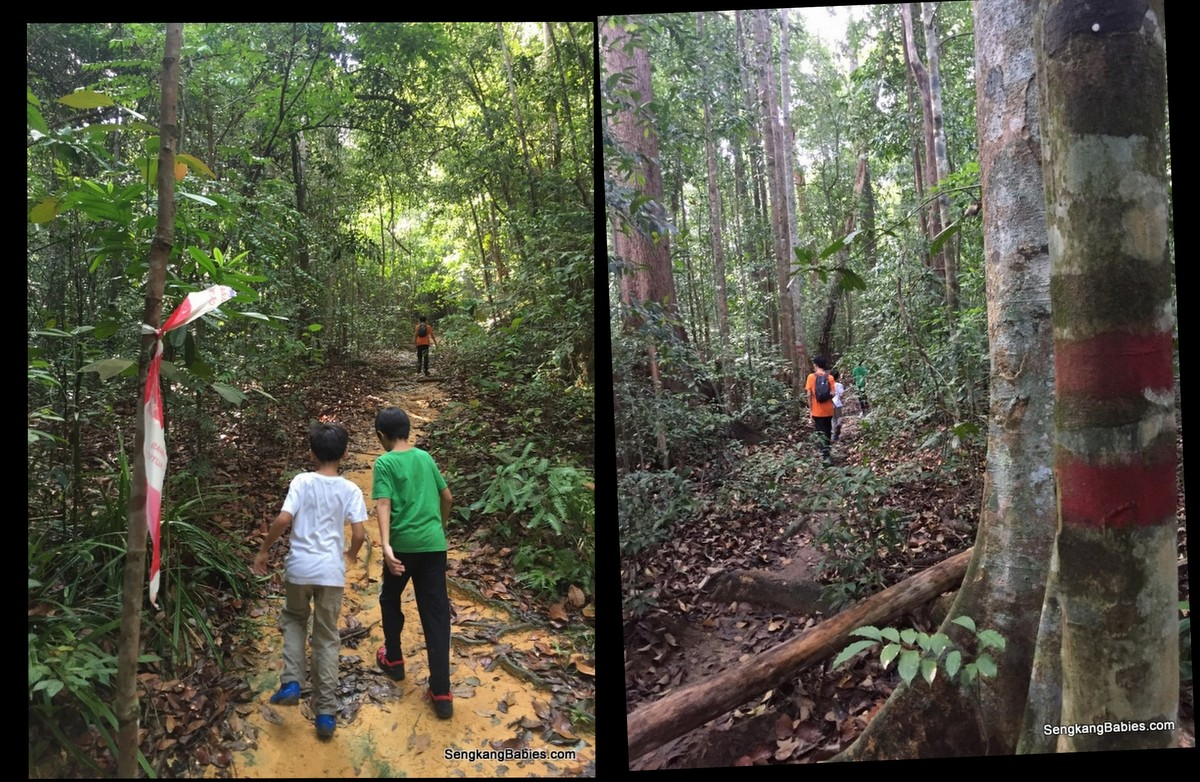 20160612 hike Gunung Panti3