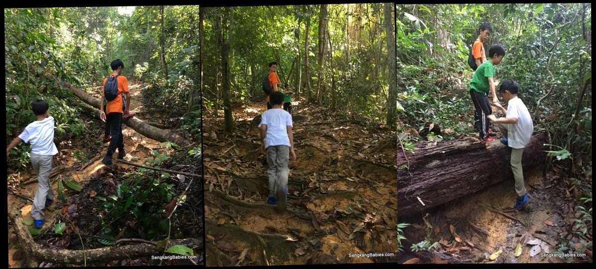 20160612 hike Gunung Panti5