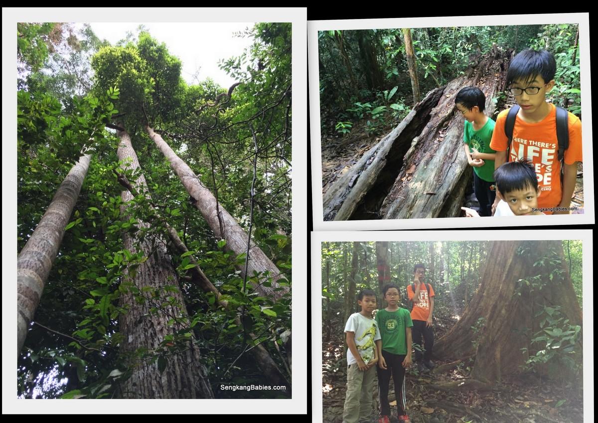 Gunung Panti photos