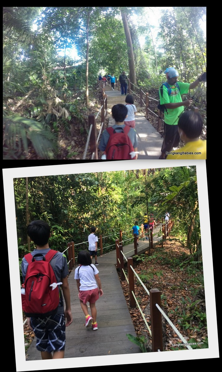 bukit Timah Hill with kids