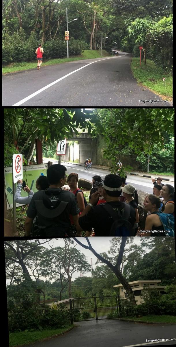 20161016-trail-durian-chestnut3