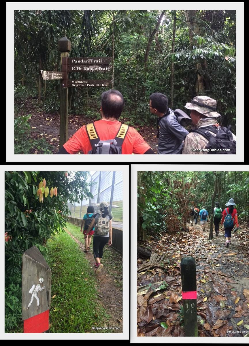 20161016-trail-durian-chestnut5