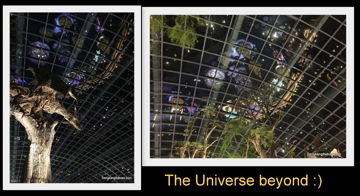 night-photos-flower-dome