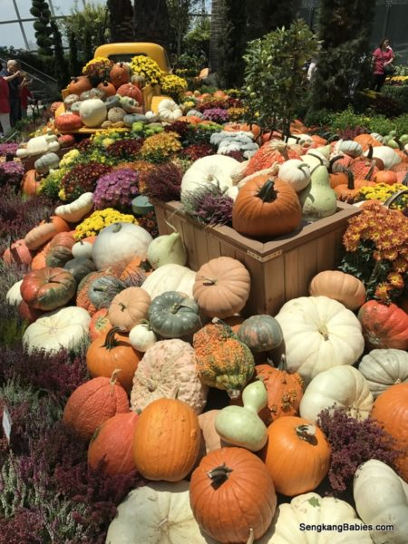 look at the golden harvest i am curious where did gbtb flew in so many varieties of pumpkins gbtb brochure highlighted season of abundance