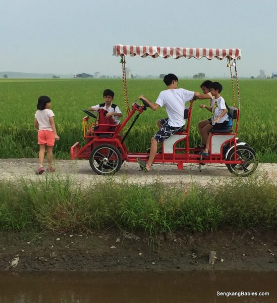 3D2N Sekinchan family trip