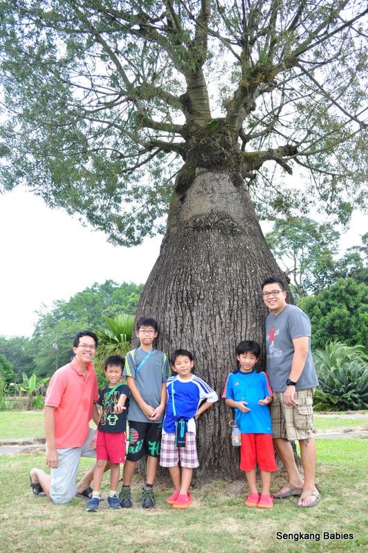 Bottle Tree park, Bottle tree