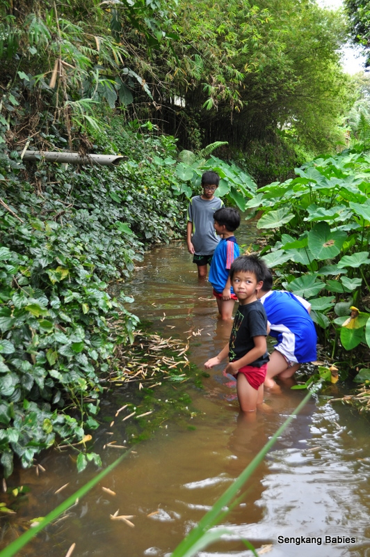 Natural stream in Singapore, where to find stream in Singapore