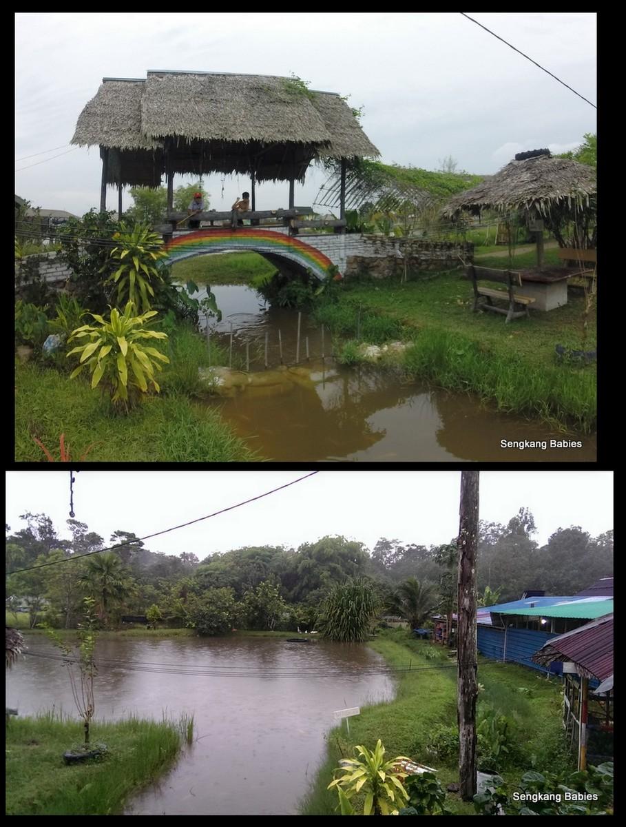 Koref Kacang Eco Farm11