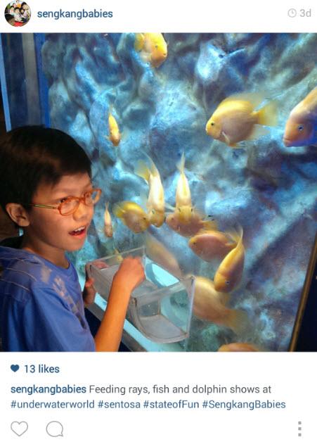 Feeding fishes Underwater World Sentosa