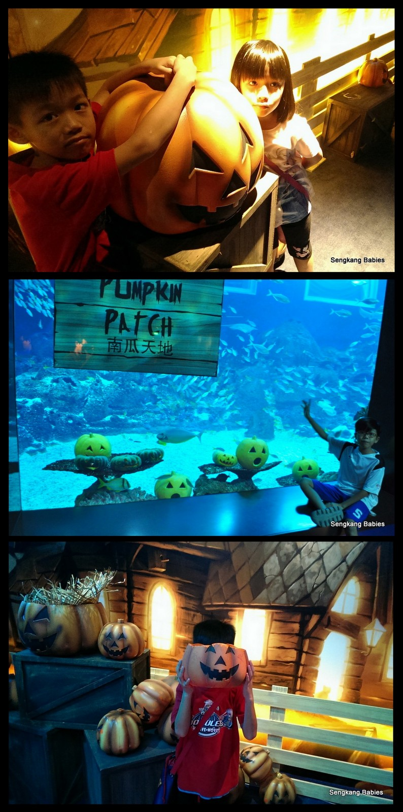 Sea Aquarium Halloween export7
