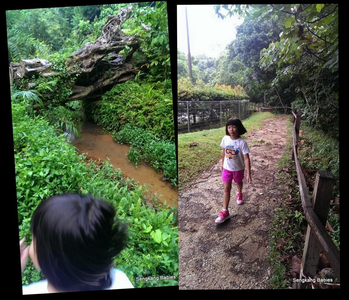 tree top walk for kids