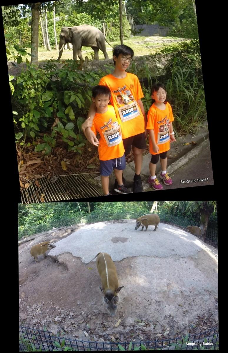 20160227 Zoo Run6