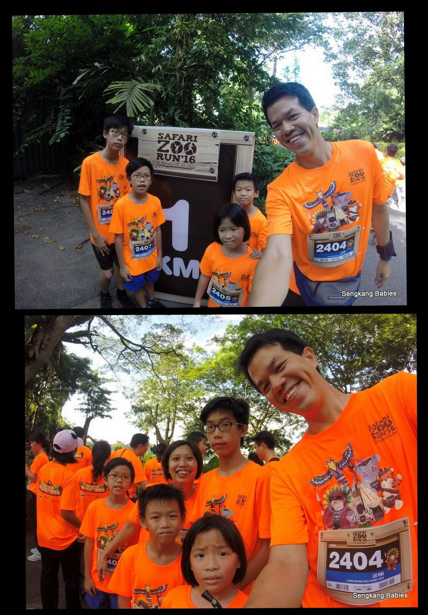 Safari Zoo run 2016