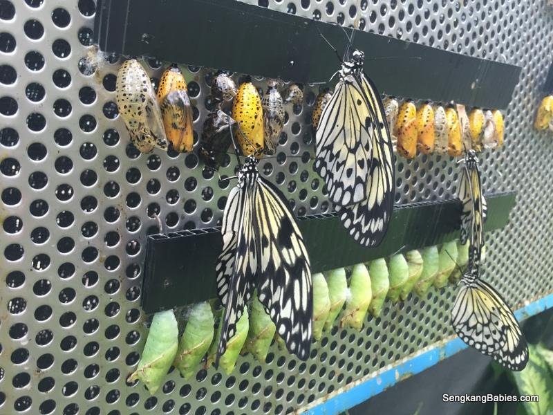science centre butterflies