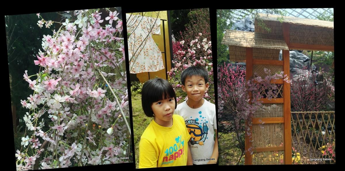 20160319 gardens cherry blossom3