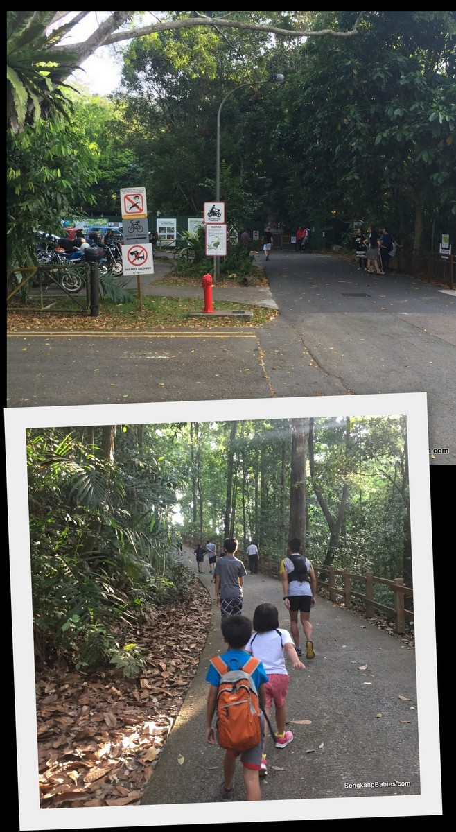 bukit timah hill photos