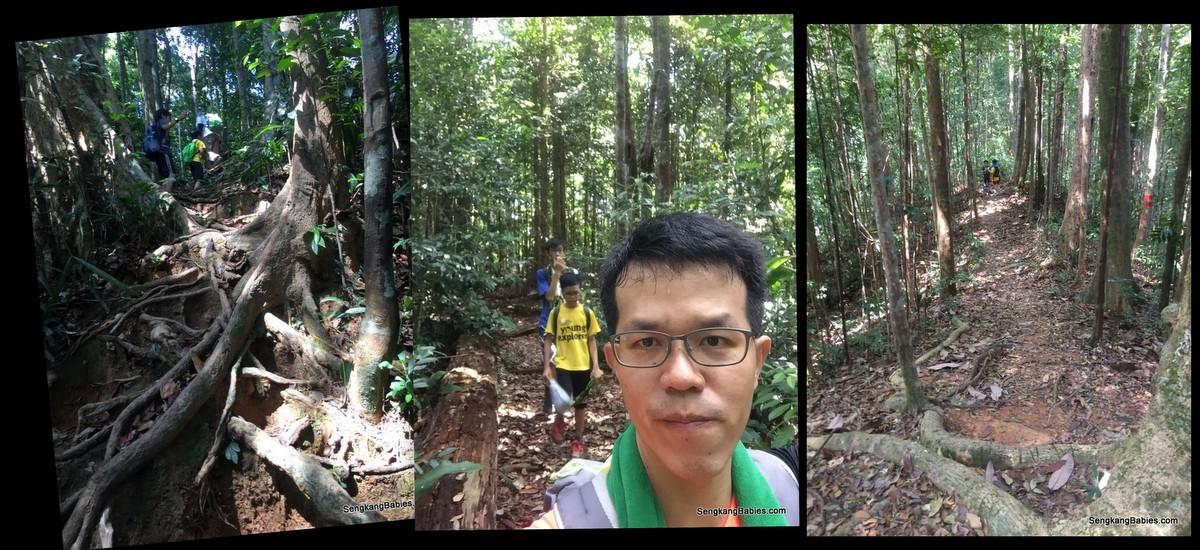 20160716 Gunung Belumut7