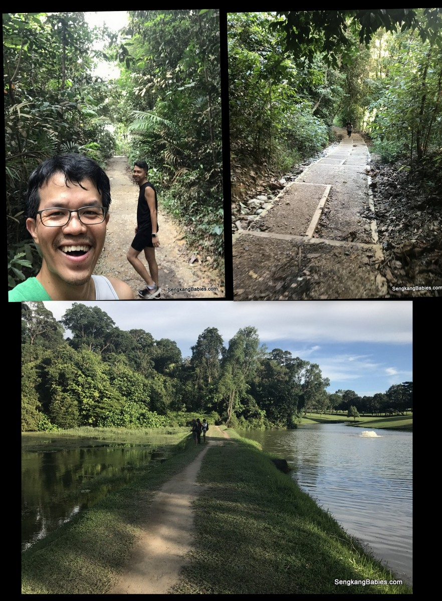 MacRitchie Reservoir running