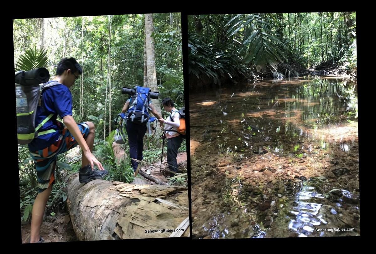 Taman Negara activities