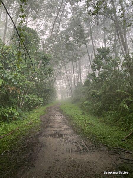Kranji Forest Mist